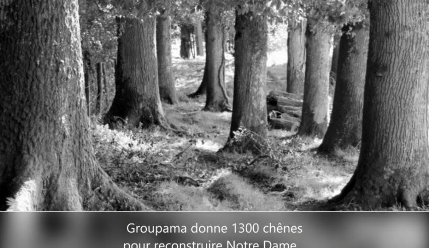 groupama 1300 chenes
